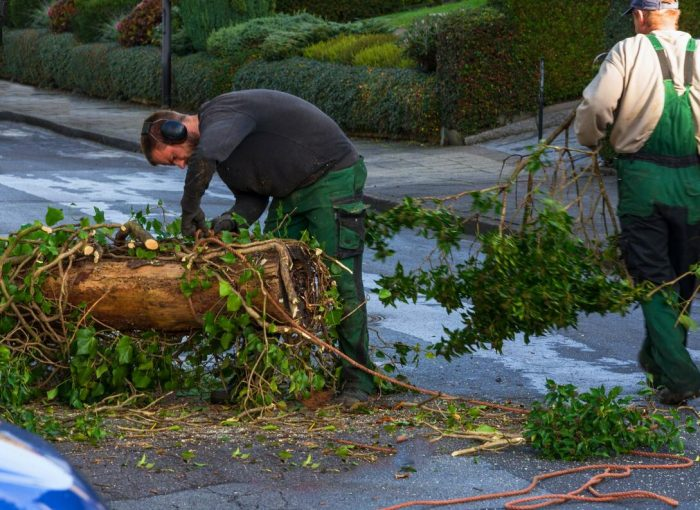 free tree cutting service