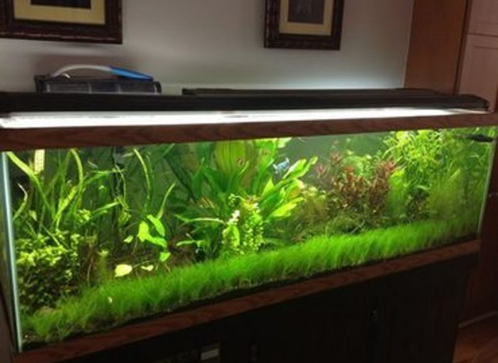 large aquarium for sale