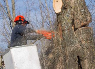 tree-removing-service