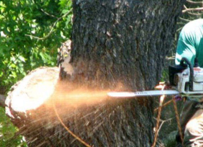 how to negotiate tree removal