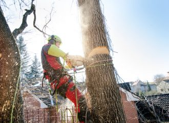 tree removal near