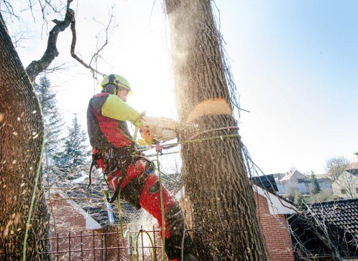 tree removal near