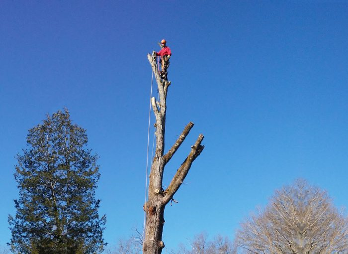 how to become an arborist in maine